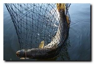 Как достать рыбу из воды