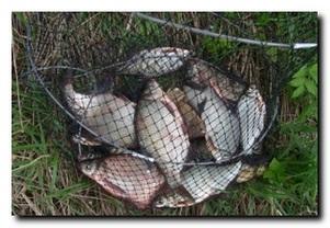 Сохранение пойманной рыбы и использование ее в пищу на рыбалке