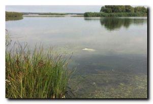 Платные водоемы. Херсонская область