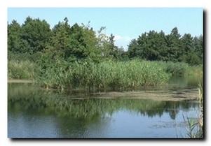 Платные водоемы. Херсонская обл. Белозерский район