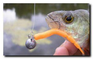 Ловля окуня на искусственного и натурального червя
